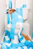 Chien sur le siège des toilettes Photographie stock