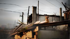 Chien sur le toit Image libre de droits