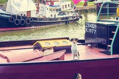 Chien sur un bateau de canal attendant le retour du propriétaire de bateau photographie stock libre de droits