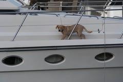 Chien sur un yacht Images libres de droits