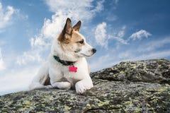 Chien sur une roche Photo libre de droits