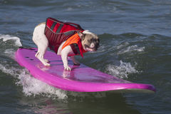 Chien surfant image stock