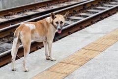 Chien tenant le chemin de fer proche Image stock