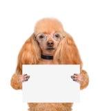 Chien tenant une bannière vide Photos stock
