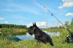 Chien terrier écossais Photographie stock libre de droits