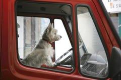 Chien terrier Image stock