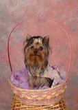 Chien terrier dans le panier de Pâques. Photo libre de droits