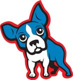 Chien terrier de Boston Photos stock