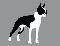 chien terrier de Boston illustration libre de droits
