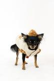Chien terrier de jouet Photo libre de droits
