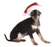 Chien terrier de jouet dans le capuchon de Noël Photo stock