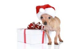 Chien terrier de jouet drôle dans le capuchon de Noël avec le cadeau Images stock
