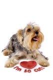 Chien terrier de Yorkshire avec un coeur 3d Photographie stock