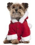 Chien terrier de Yorkshire dans l'équipement de Santa, 9 années Photo stock