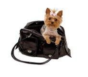 Chien terrier de Yorkshore dans un sac noir de course Photos libres de droits