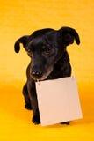 Chien terrier noir triste Images stock