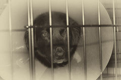 Chien triste dans la cage avec le cône sur la tête Photos libres de droits