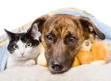 Chien triste et chat se trouvant sur un oreiller sous une couverture D'isolement Images stock