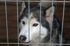 Chien triste verrouillé dans la cage Photo libre de droits