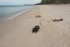 Chien trois dormant sur la plage Photo stock
