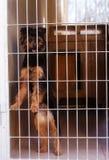 Chien vagué mignon dans le gitter behing d'abri de chien Photographie stock libre de droits