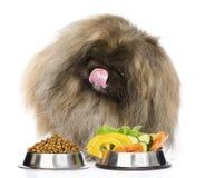 Chien velu reposant avec des cuvettes d'aliments pour chats et de légumes secs D'isolement Photographie stock libre de droits
