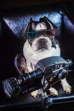 Chien Videographer Photographie stock libre de droits