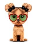 Chienchien adorable avec des lunettes de soleil, d'isolement sur le blanc Photos stock