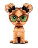 Chienchien adorable avec des lunettes de soleil, d'isolement sur le blanc Photo libre de droits