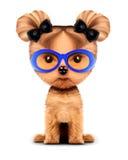 Chienchien adorable avec des lunettes de soleil, d'isolement sur le blanc Photographie stock