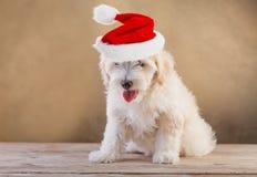 Chienchien avec le chapeau de Santa Photographie stock