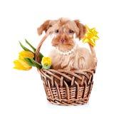 Chienchien dans un panier avec des fleurs. Image stock