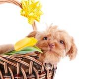 Portrait de chienchien dans un panier avec des fleurs. Photo libre de droits