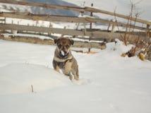 Chienchien dans la neige Image stock