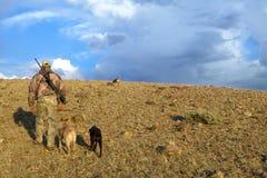 Chiens américains camouflés de chasseur et de cheminement photo libre de droits