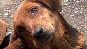 Chiens, canines, animaux familiers, animaux banque de vidéos