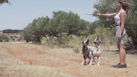 Chiens dalmatiens jouant et sautant dans la forêt banque de vidéos