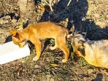 Chiens dans l'abri de chien photographie stock libre de droits