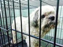 Chiens dans la cage préparant pour attendre les cheveux chez l'animal Ca photos stock