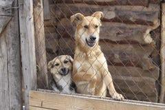 Chiens dans la famille des besoins de cages d'abri Photographie stock
