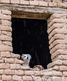 Chiens dans le froid de Huesca Images libres de droits