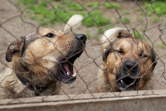 Chiens dans le refuge pour animaux Photos libres de droits
