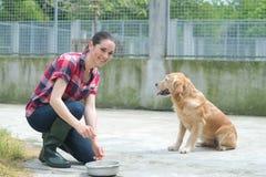 Chiens de alimentation volontaires de refuge pour animaux Photo stock