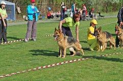 Chiens de berger allemand et leurs propriétaires à l'exposition du chien dans Volzhsky photo libre de droits