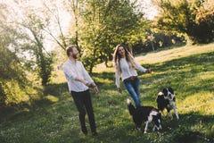 Chiens de caresse et de marche de beaux couples dehors Photographie stock