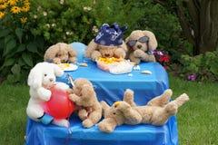 Chiens de fête d'anniversaire images stock