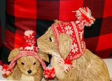 Chiens de mère et de bébé de brosse de poil dans des chapeaux de Noël Photo stock