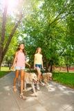 Chiens de marche dehors dans l'alle de parc Images stock