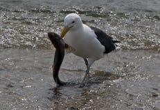 Chiens de mer pour le dîner chez Mudeford Quay photos stock