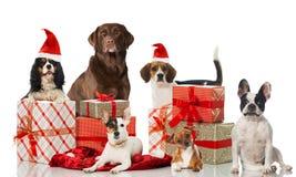 Chiens de Noël image libre de droits